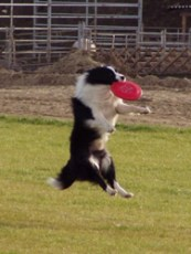Univerzoo, 2011, a repülő kutya